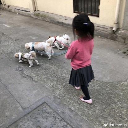 邓超女儿遛狗照片引围观 网友吐槽发型还是那么乱
